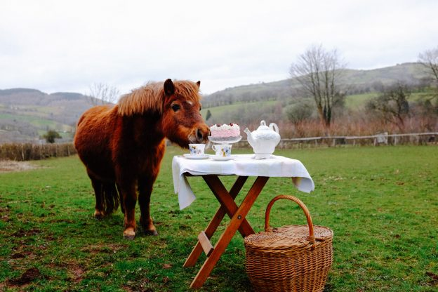 LLuest Horse and Pony Trust Big Lunch event