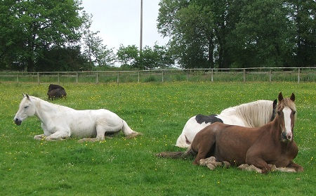Lluest Horse and Pony Trust  - horse out on loan