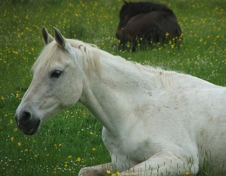 Lluest Horse and Pony Trust - rescue horse on loan