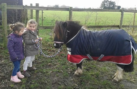 Lluest Horse and Pony Trust - rescue miniature horse