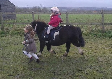 Lluest Horse and Pony Trust  - Miniature horse rescue