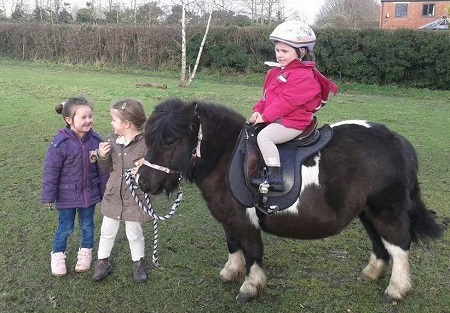 Lluest Horse and Pony Trust  - rescue pony